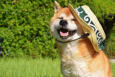 image2(暑そうな犬)