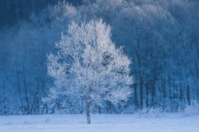 シベリアのような寒そうな画像